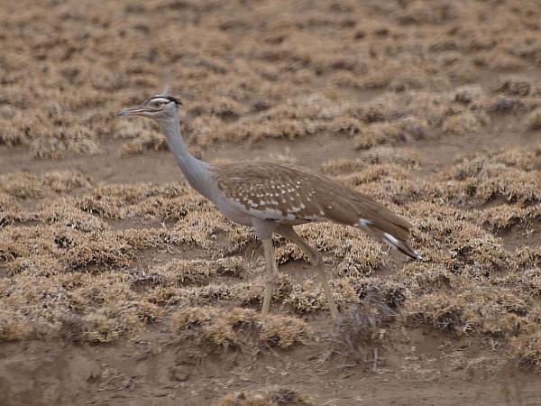 birding never sleeps: ETHIOPIA 12 February 2011: Debre ...