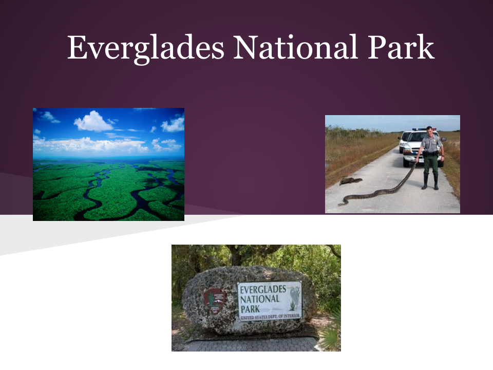 essay on everglades national park