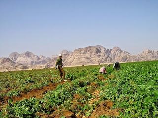 Pertanian Organik di Gurun Wadi Rum, Yordania