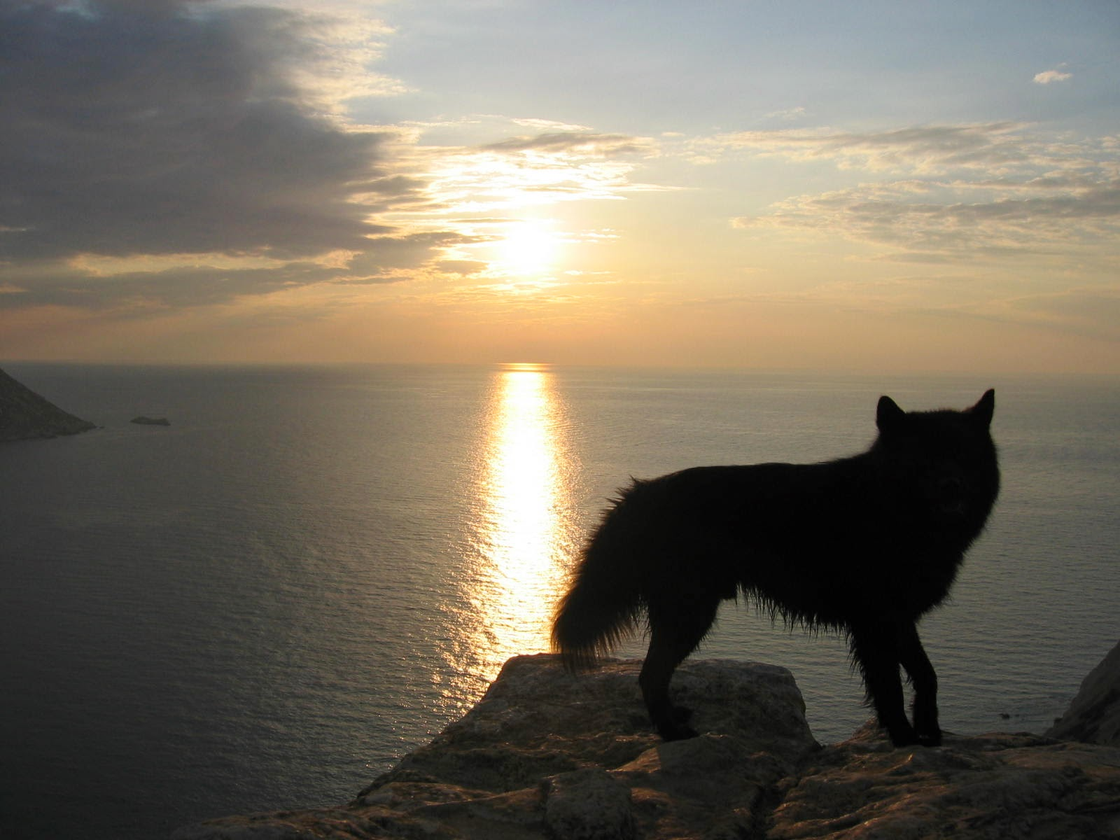 海を見つめる狼