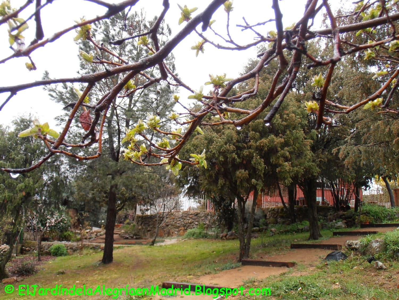 El jard n de la alegr a tras la lluvia for El jardin de la alegria cordoba