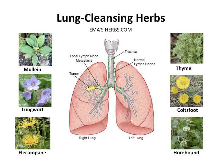 Lung Cleansing Herbs Diy Today Online Network