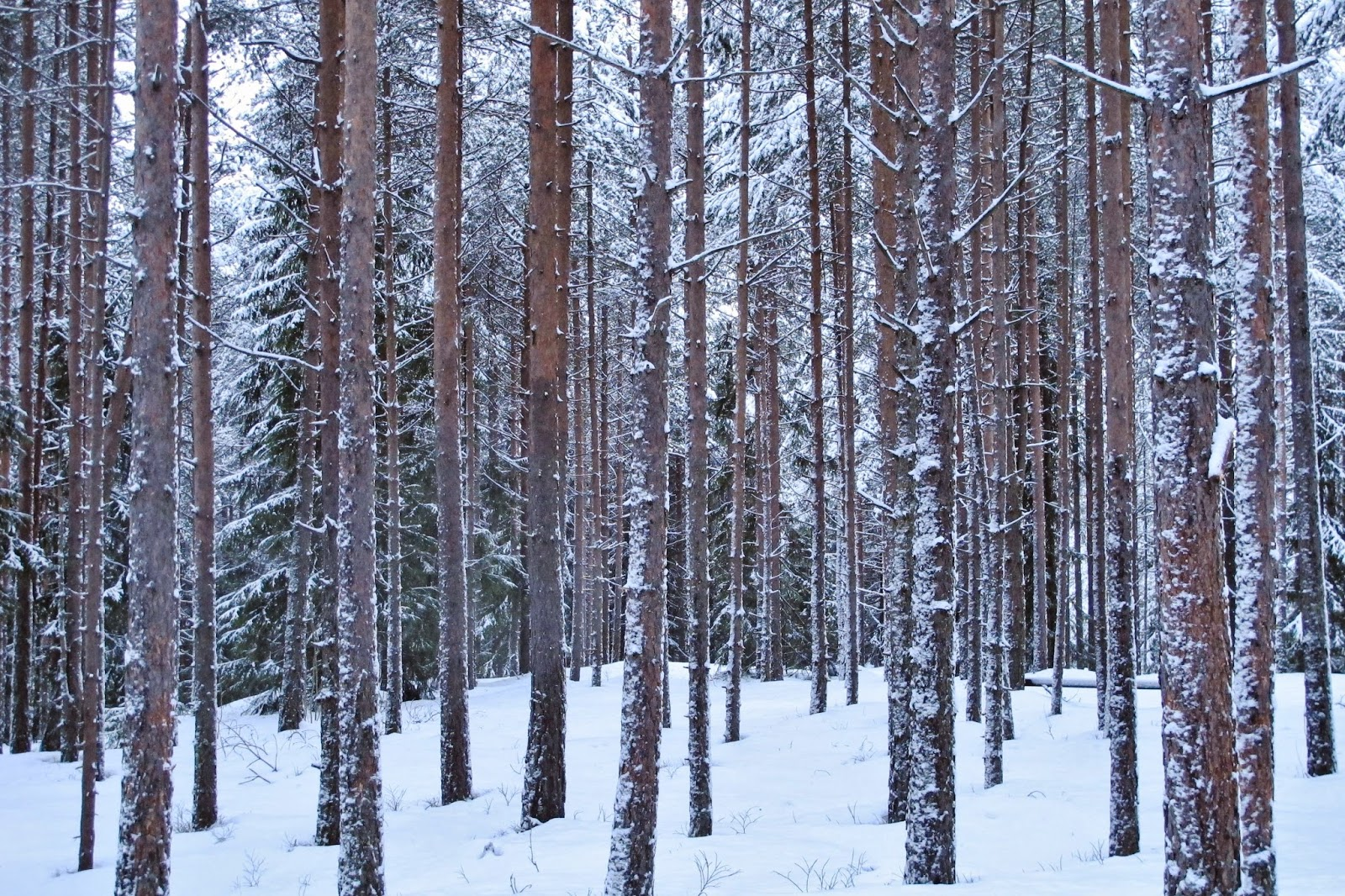 traer men Men det er ikke bare tømmer til industrien det blir mer av også nasjonalparker og skogreservater utgjør en stadig større andel av skogstatistikken.