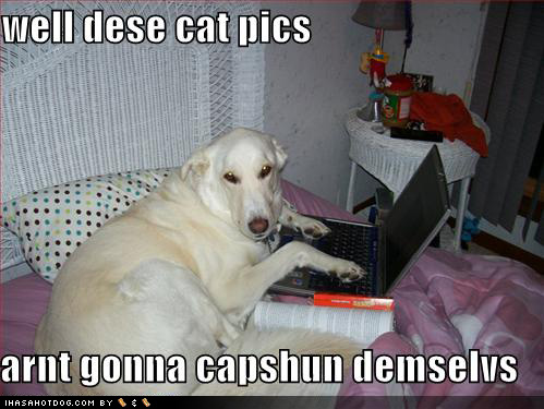 Funny Pictures Lol Cats Captions Images And Photos Cat