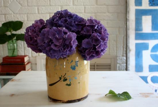 Hydrangea, Hydrangea, Gardenia