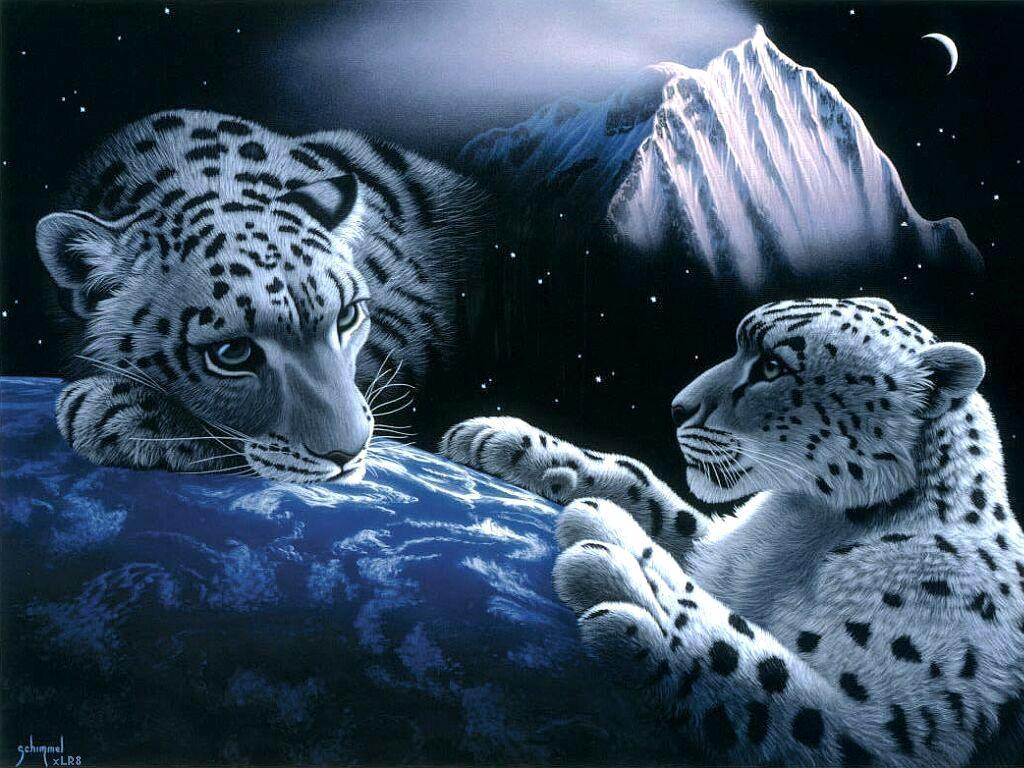 http://2.bp.blogspot.com/-XtUX8ImSz9I/UARYMI7aysI/AAAAAAAAACw/dqT35vZuCmU/s1600/tigre+blanco.jpg