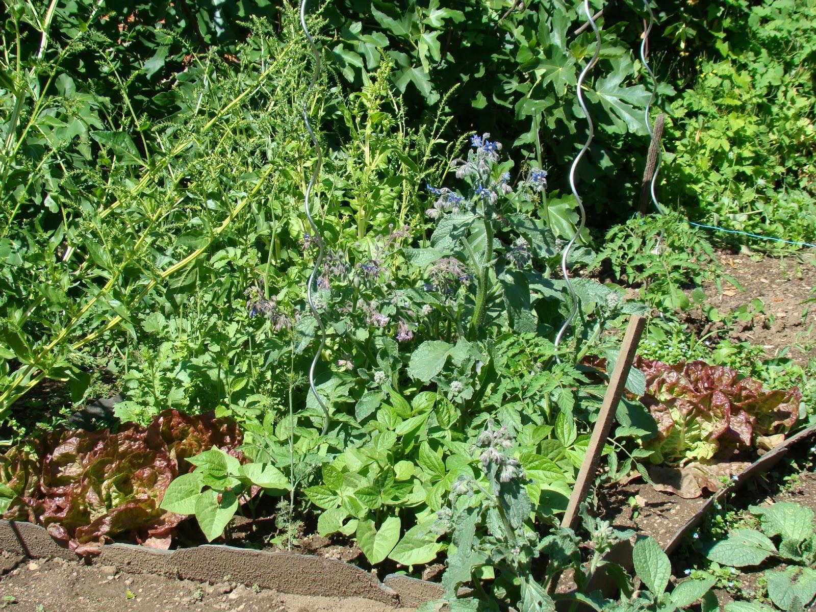 Le jardin de catherine janvier 2013 - Bettes au jardin ...