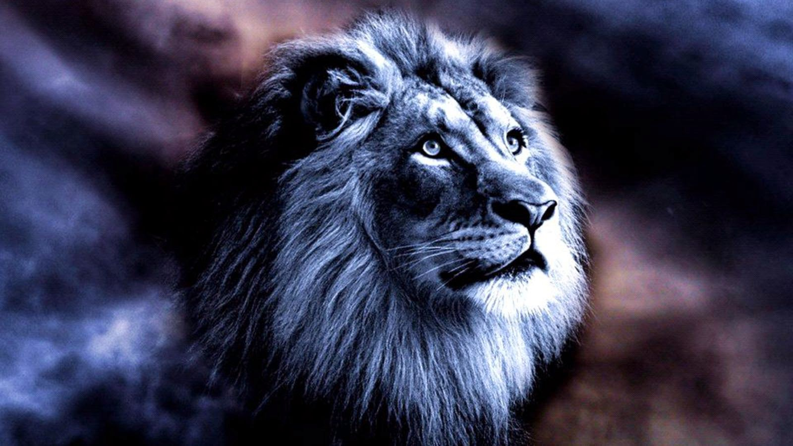 Blue lion wallpaper hd - photo#9