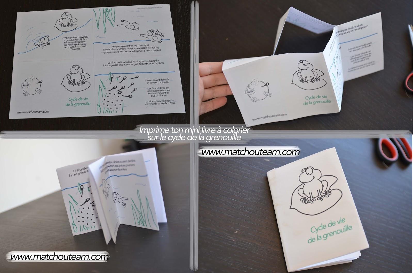 cycle de vie de la grenouille livre à imprimer
