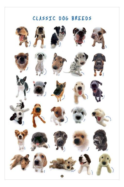 Classic Dog Breeds