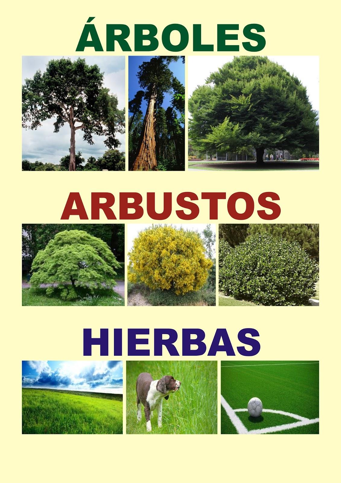 Material educativo afiche de rboles arbustos hierbas - Arboles y arbustos ...