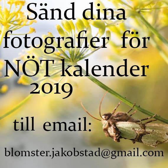 Viktigt! Kalender 2019