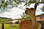 【奈良国立博物館 西新館・東新館・なら仏像館・青銅器館 「古事記の歩んできた道」「珠玉の仏教美術」「珠玉の仏たち」(奈良県奈良市)】