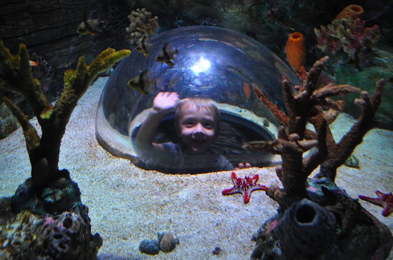 The Brady Family At The New Sea Life Aquarium In Kansas City
