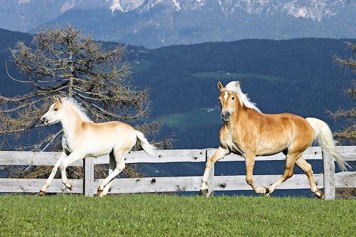 Caballos jugando en las praderas - Horses playing at the hills