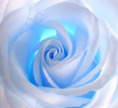 http://2.bp.blogspot.com/-Xv2kMM7b7_Q/TsEh_kjQmrI/AAAAAAAAAgo/WMb9ThRXPKA/s1600/rose%2Bbleu.jpg