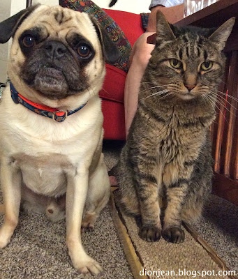 Pug and brown cat sitting close together