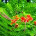 mùa hạ miền tây - Mùa phượng về đỏ nắng yêu thương