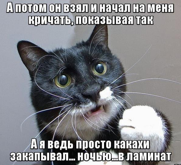 Кот просто закапывал какахи
