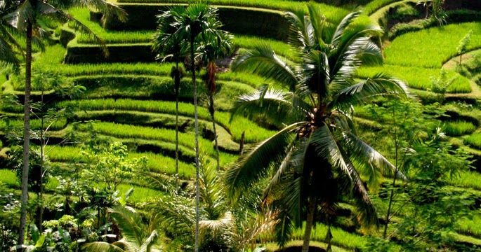 Things to do in bali guide tegalalang rice terrace for Tegalalang rice terrace ubud
