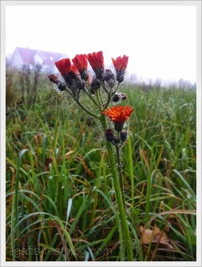 Wiesenblümchen mit Morgentau