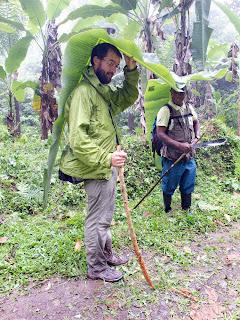 Protegido por un paraguas de hoja de plátano en Santo Tomé y Principe
