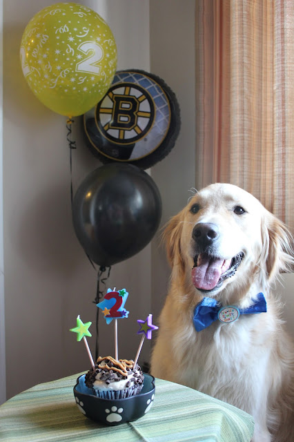 picture of birthday dog with cake and balloons