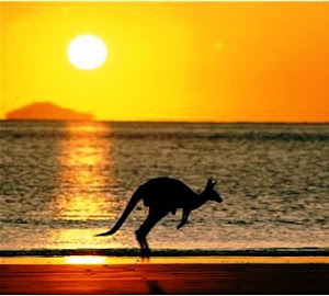 Sunset Ocean and Kangaroo