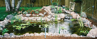 The value of clear ponds to the environment