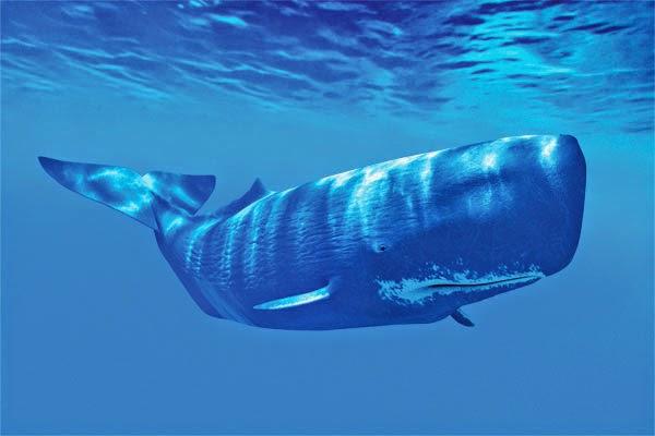 O mistério chegou ao fim foi relavado a criatura que engoliu o tubarão de 3 metros.