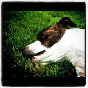 Gratuitous Dog Picture