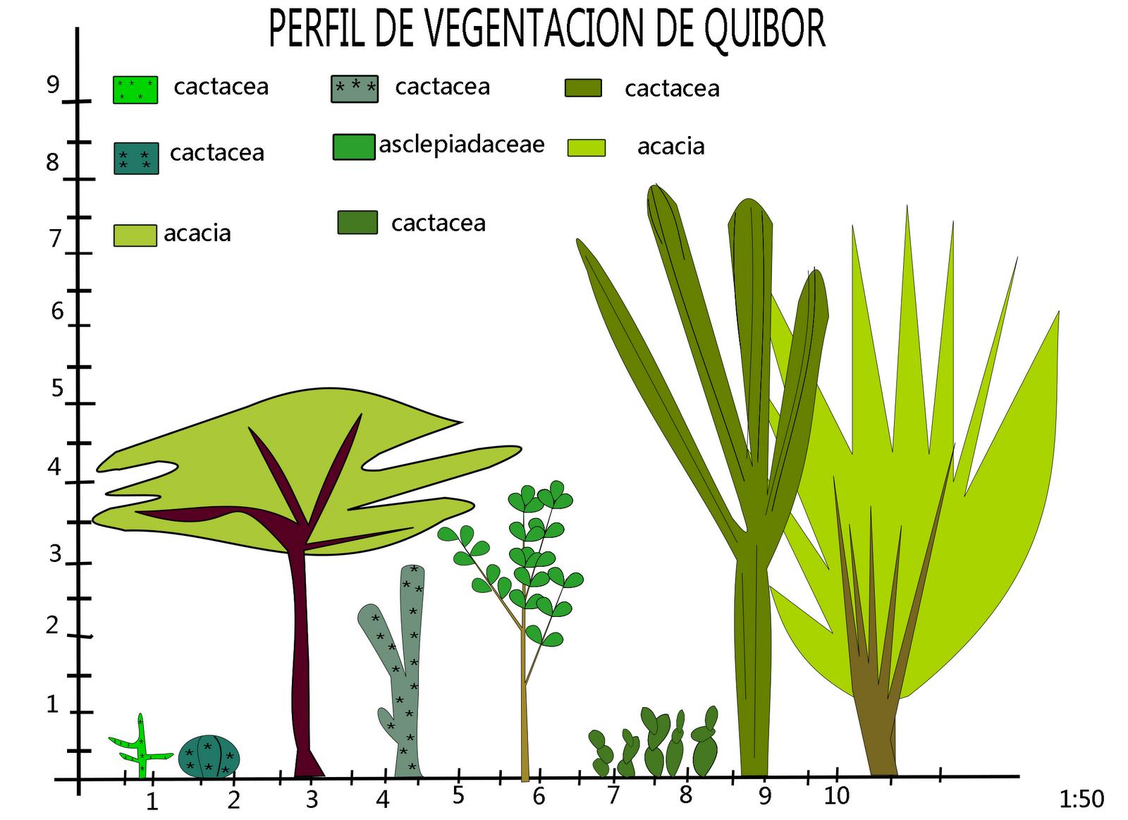 perfil de vegetación de Quibor