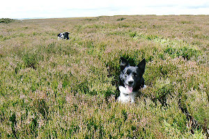 Happy as a Dog in Heather