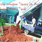 persiapan lahan dengan tanah merah untuk pasang rumput gajah mini