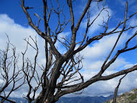Reminder of the Sept. 2009 Morris Fire on Glendora Mountain ridge, Angeles National Forest