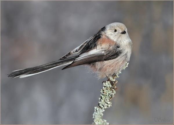 Cute Bird Photography by Anna Solisia
