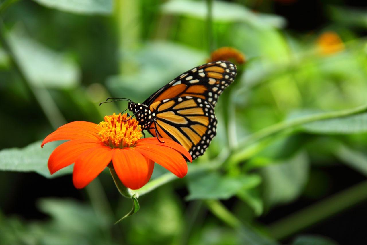 foto de mariposa para imprimir