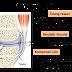 Rawatan Sakit Lutut