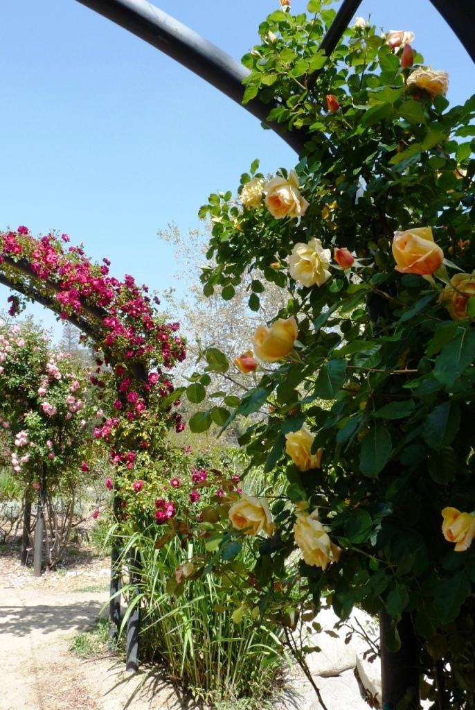 journal d 39 une fran aise los angeles amoureux de la nature bienvenue aux jardins descanso. Black Bedroom Furniture Sets. Home Design Ideas