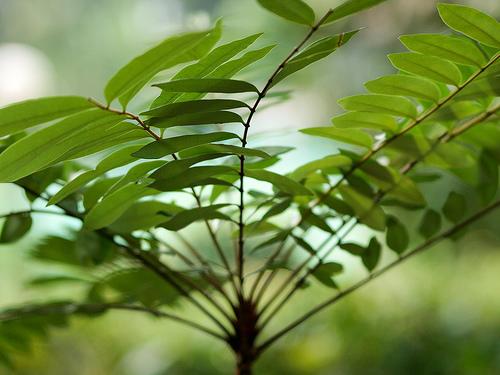 pasakbumi 5 Jenis Tumbuhan Yang Paling Berkhasiat