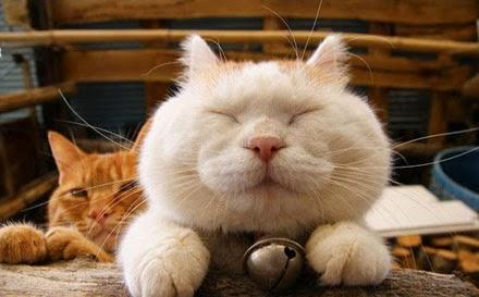 Gato feliz Publicitário13