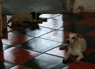 Puppies enjoying the new floor