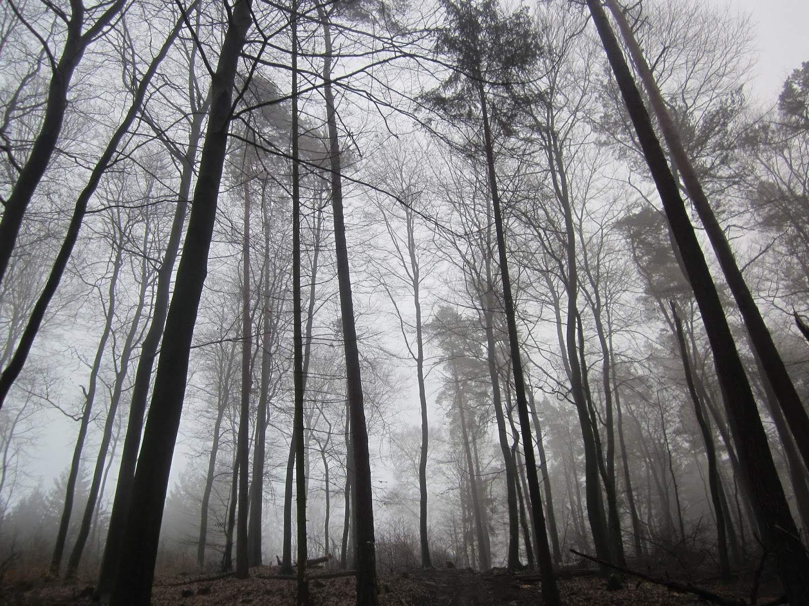 schrock hiking: misty trees