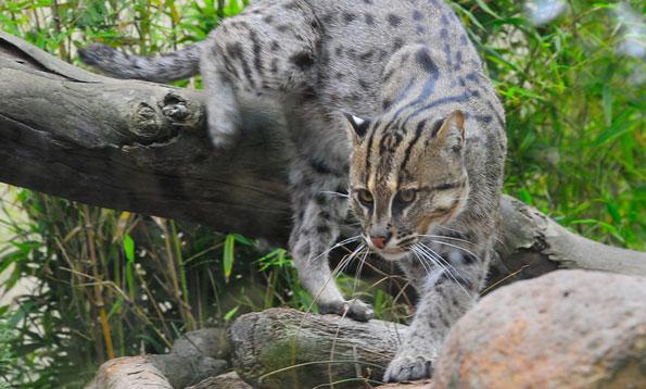 Fishing cat xamobox blogspot com relax for Cat fishing 2