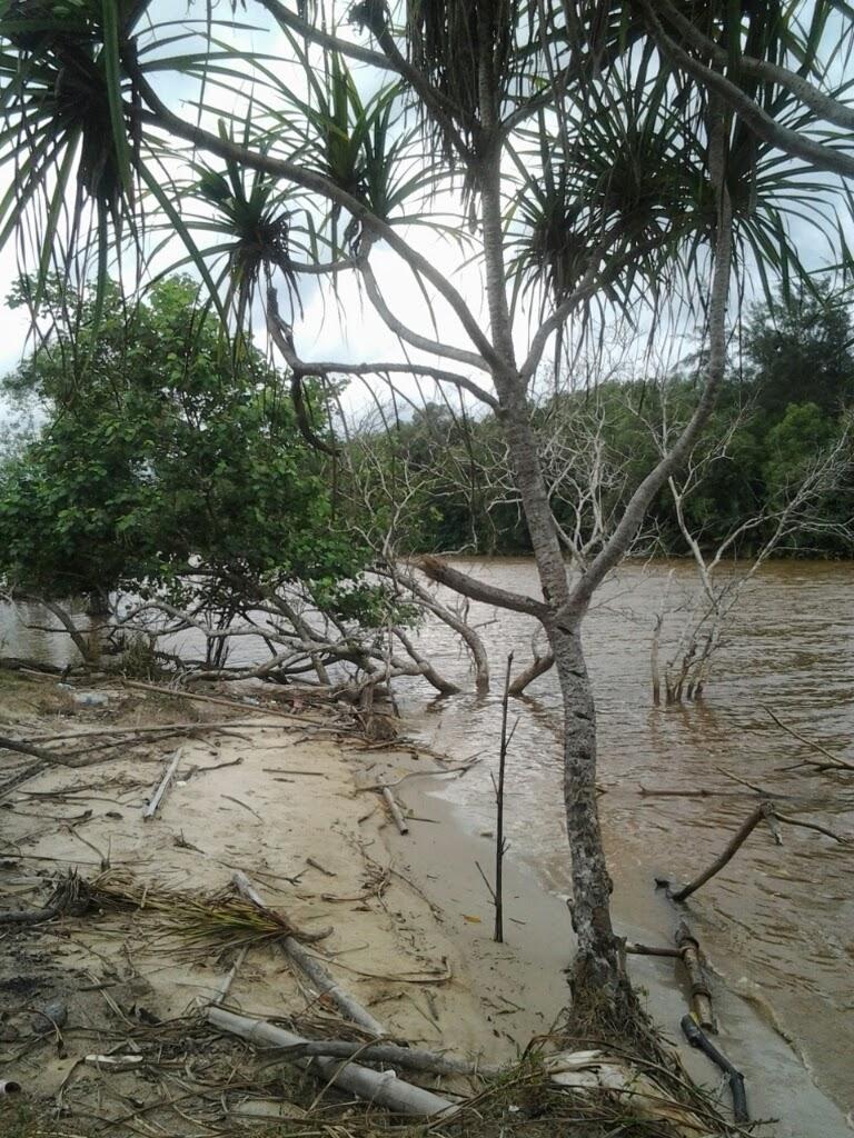 sungai membakut