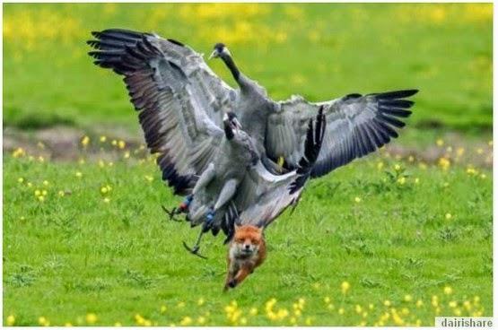 Jom Tengok Apa Jadi Apabila Burung Marah
