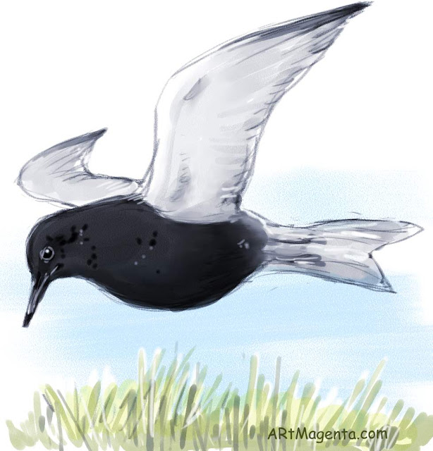 Black tern is a bird drawing by digital artist and illustrator Artmagenta