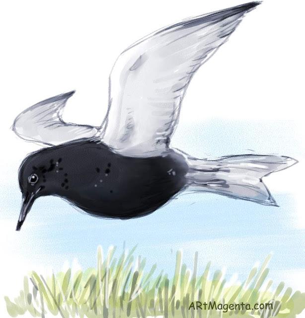 Black tern is a bird drawing by digital artist and illustrator Artmagenta
