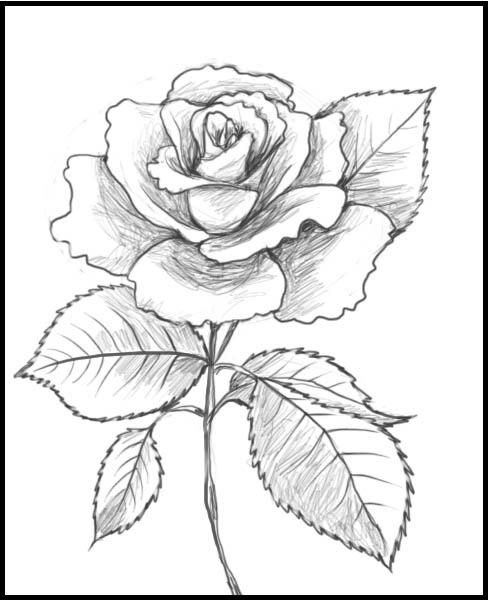 Craft 360 glass painting patterns for Cool rose drawings