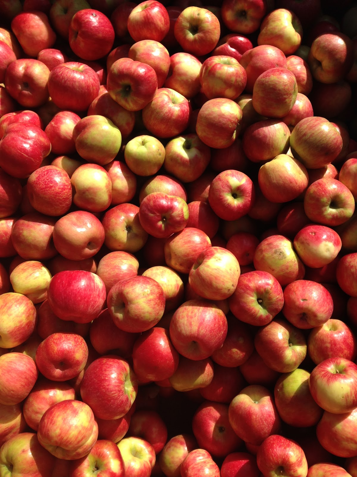 Honey Crisp Apples at Mountain Orchards | Akinokiki